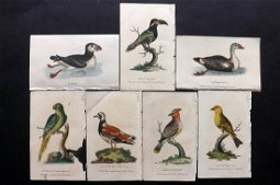 After George Edwards C1800 Lot of 7 HCol Bird Prints