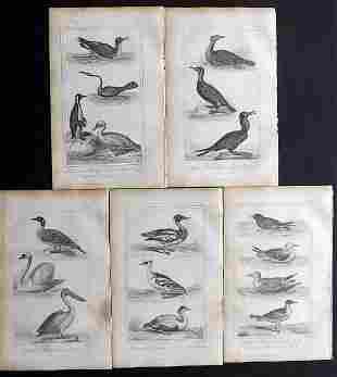 Buffon, Comte de 1821 Lot of 5 Bird Prints