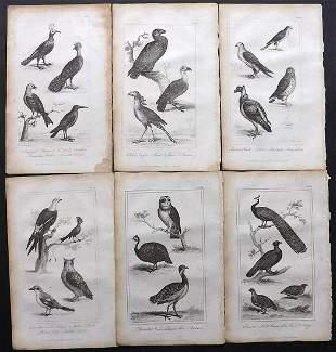 Buffon, Comte de 1821 Lot of 6 Bird Prints