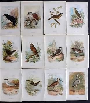Swaysland, Walter 1883 Lot of 12 Antique Bird Prints