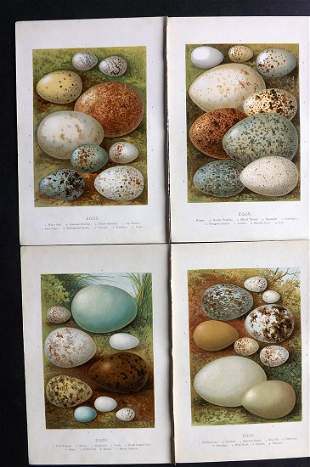 Swaysland, Walter 1883 Lot of 4 Bird Egg Prints