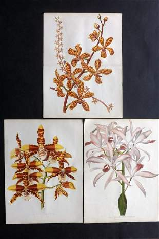 Anderson, James C1875 Lot of 3 Botanical Prints Orchids
