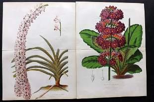 Anderson, James C1875 Pair of Botanical Prints
