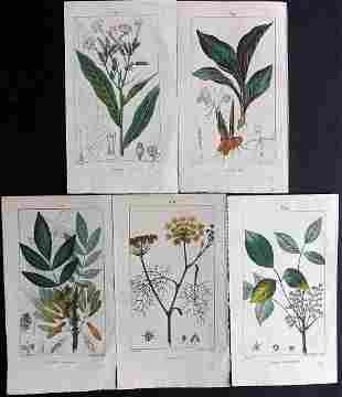 Turpin, Pierre 1816 Lot of 5 Hand Col Botanical Prints