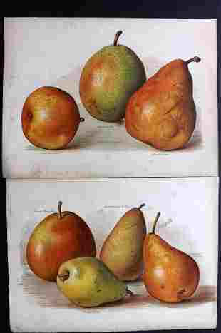 Wright, John 1890's Pair of Fruit Prints. First Edition