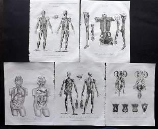 Wilkes, John 1796 Lot of 5 Anatomy Prints