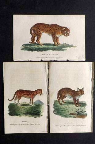 After George Edwards C1800 Lot of 3 HC Prints. Cats
