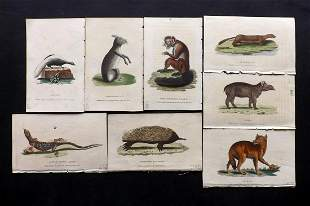 After George Edwards C1800 Lot of 8 Hand Col Prints