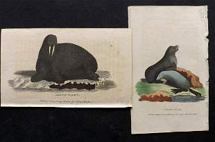After George Edwards C1800 Pair HC Prints. Seal Walrus