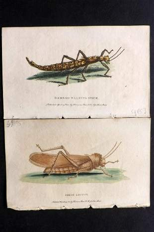After George Edwards C1800 Pair of HC Insect Prints