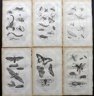 Buffon, Comte de 1821 Lot of 6 Prints. Insects