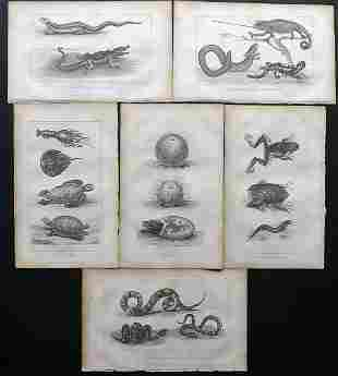 Buffon, Comte de 1821 Lot of 7 Prints. Reptiles