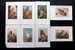 Thorburn, Archibald 1926 Lot of 8 Bird Prints. Owls