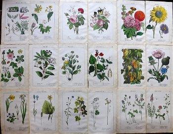 Yonge, Charlotte 1857 Lot of 18 HCol Botanical Prints