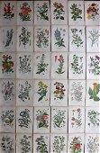 Step, Edward 1897 Lot of 36 Botanical Prints