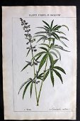 Yonge, Charlotte 1857 Folio HC Botanical. Cannabis Hemp