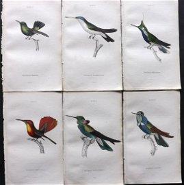 Jardine, William 1833 Lot of 6 HCol Prints Hummingbirds