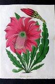 Paxton, Joseph 1834 HC Double Botanical Print. Cactus