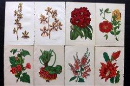 Anderson, James 1874 Lot of 8 Botanical Prints