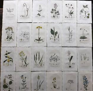 Baxter, William 1836 Lot 24 Hand Col Botanical Prints