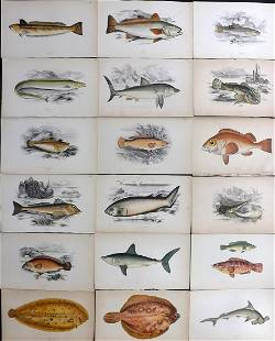 Couch, Jonathan 1878 Lot of 18 Antique Fish Prints