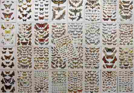 Gordon, W. J. C1900 Lot of 33 Butterfly & Moth Prints