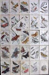 Jardine, William 1841 Lot of 26 HCol Prints. Exotic