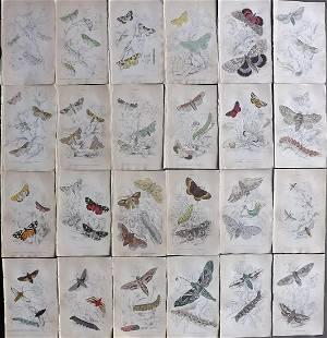 Jardine, William 1836 Lot of 24 HCol Prints. British