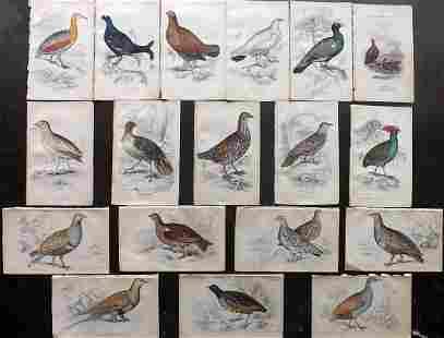 Jardine, William C1840 Lot of 18 Hand Col Bird Prints