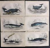 Jardine, William C1840 Lot of 6 Hand Col Prints. Whales