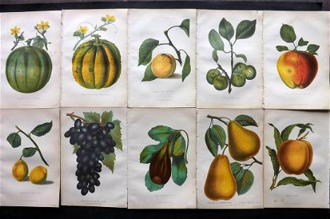 Anderson, James 1874 Lot of 10 Antique Fruit Prints