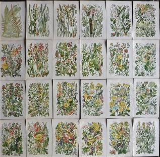 Gordon, W. J. C1900 Lot of 24 Botanical Prints