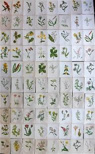 Pratt, Anne C1855 Lot of 80 Antique Botanical Prints