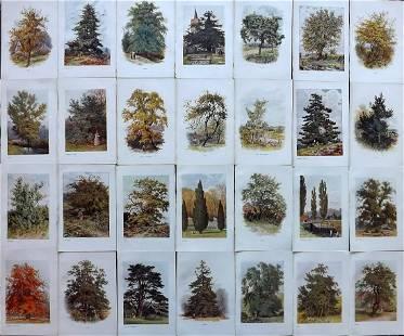 Boulger, George 1907 Lot of 28 Botanical Tree Prints
