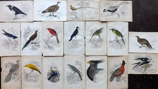 Jardine, William 1830s Lot of 18 Hand Col Bird Prints