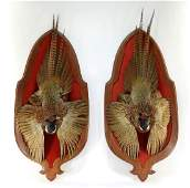 PR Taxidermy Mounted Pheasant Game Birds