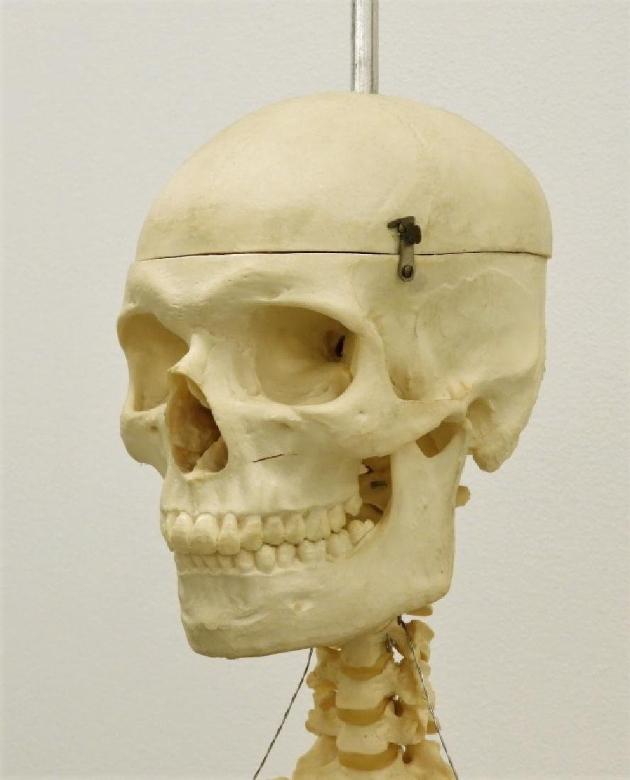American Medical School Practice Faux Skeleton - 2