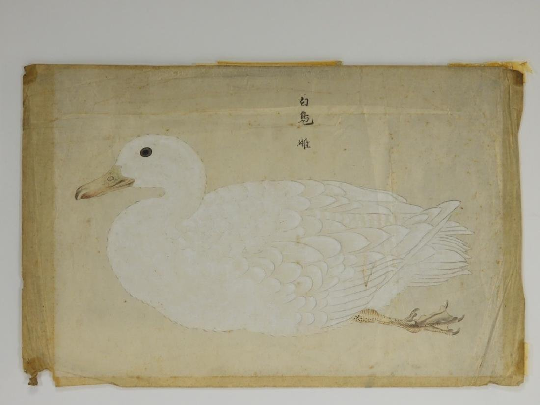 18C Chinese Watercolor Paper Peking Duck Painting