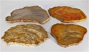 4 Polished Petrified Wood Fossil Specimen Slabs