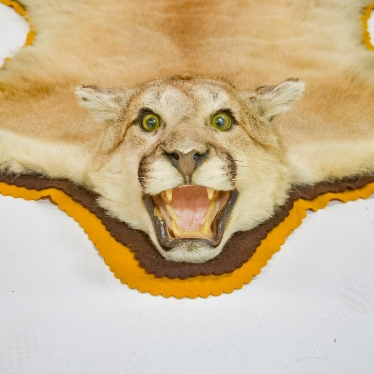 American Mountain Lion Cougar Taxidermy Carpet - 2