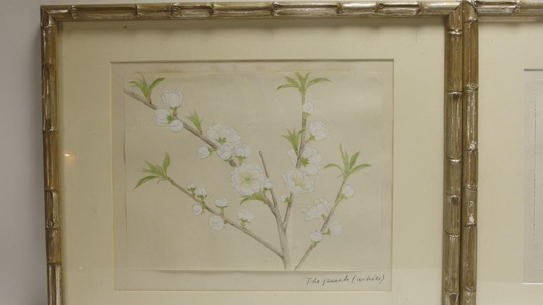 4 Chinese Floral Botanical Watercolor Paintings - 3