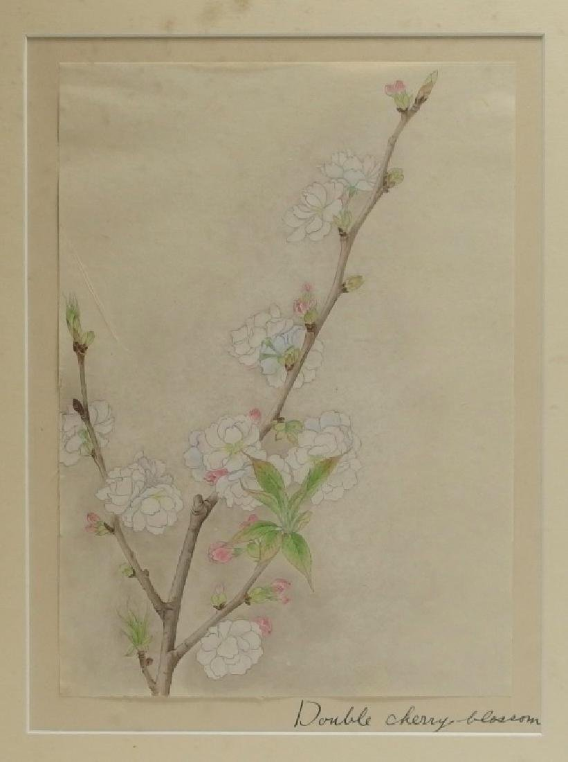 4 Chinese Floral Botanical Watercolor Paintings - 8
