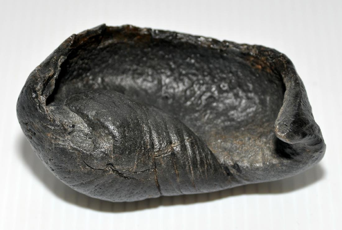 Whale fossil inner ear drum
