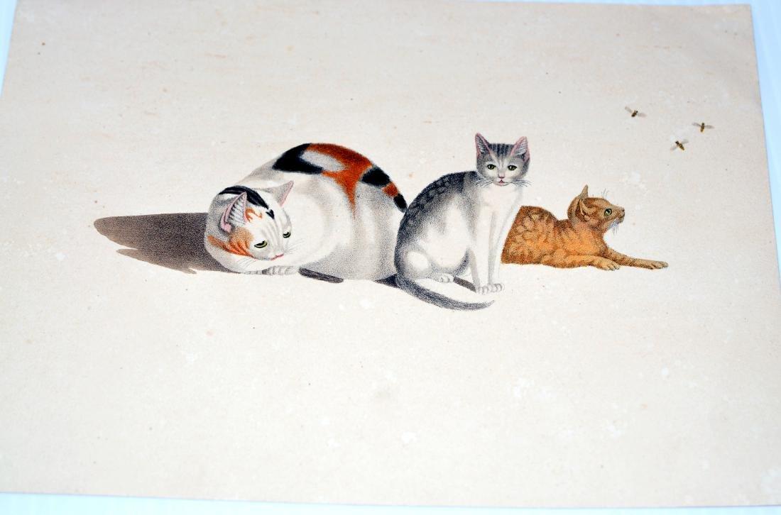 Lithograph Carl Reichert cats- bees