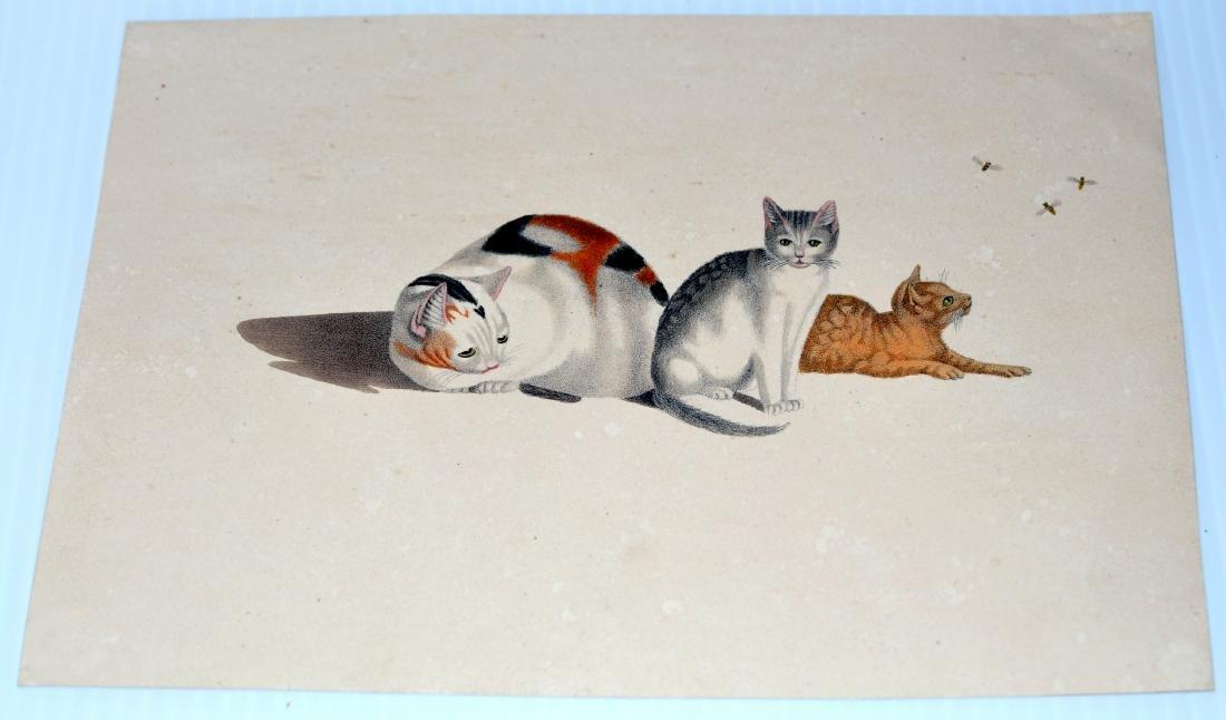 Lithograph Carl Reichert cats- bees - 2