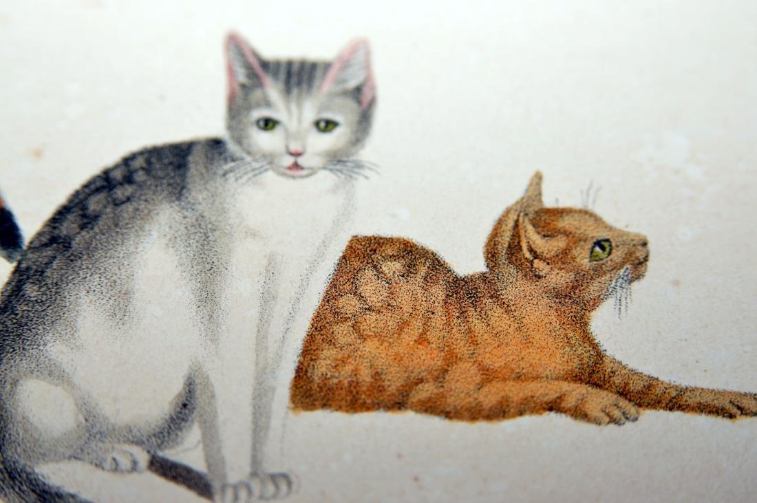 Lithograph Carl Reichert cats- bees - 5