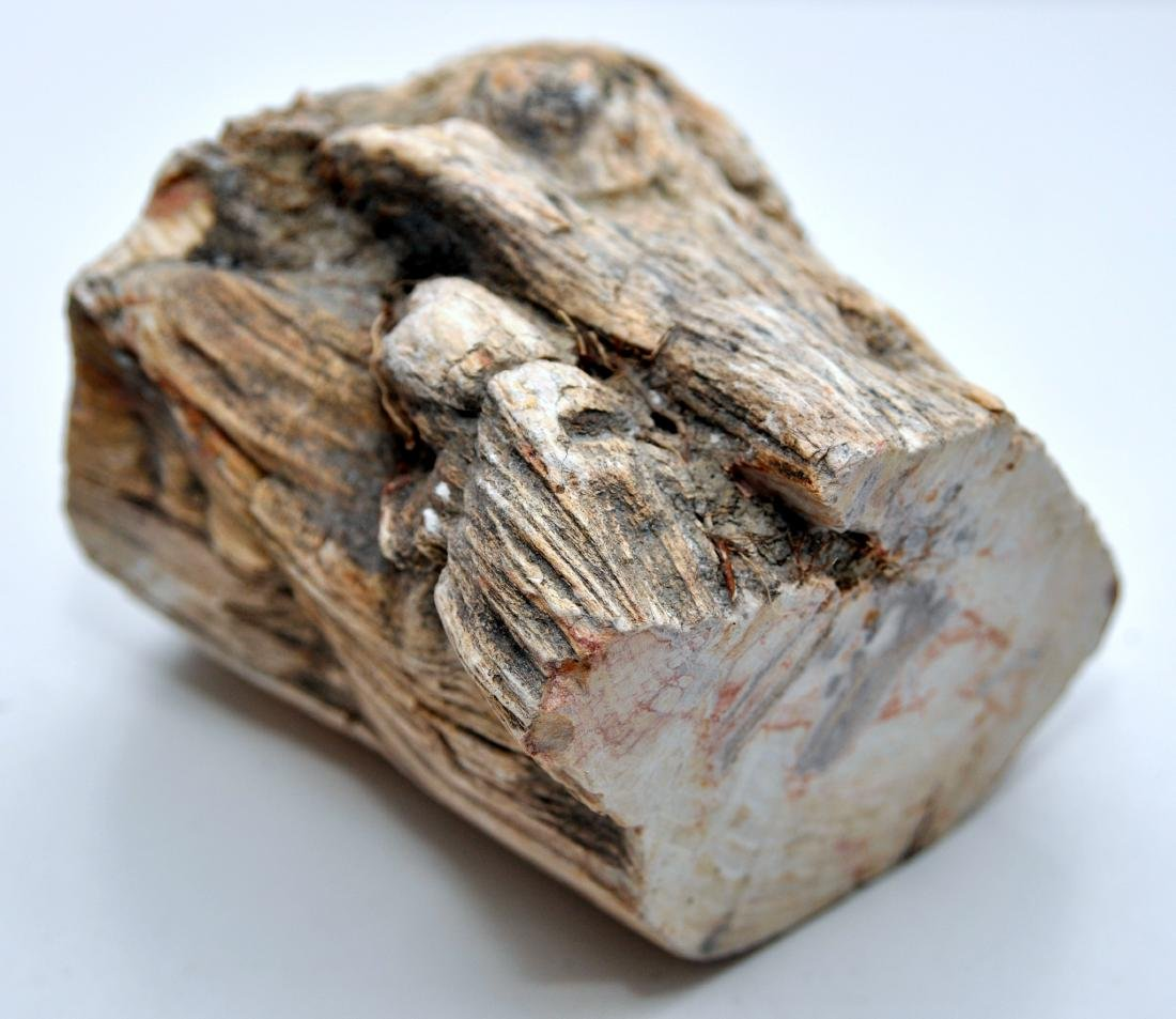 Petrified wood branch mineralized - 2