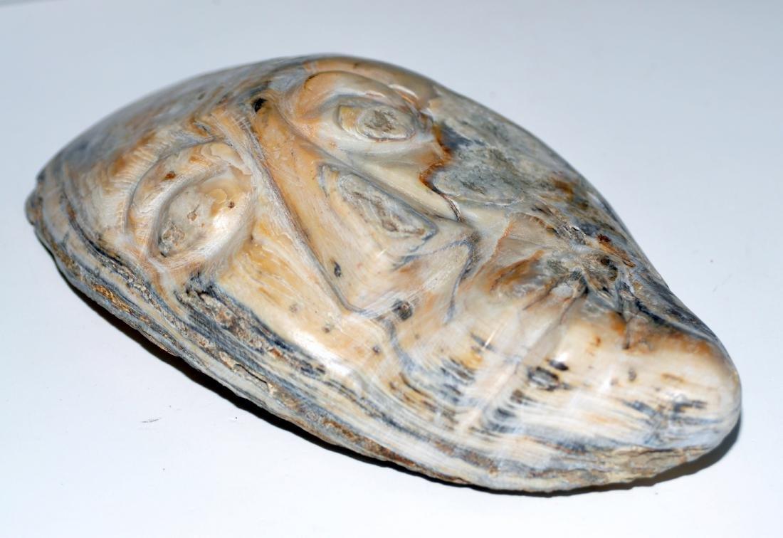 Oyster shell mask prehistoric