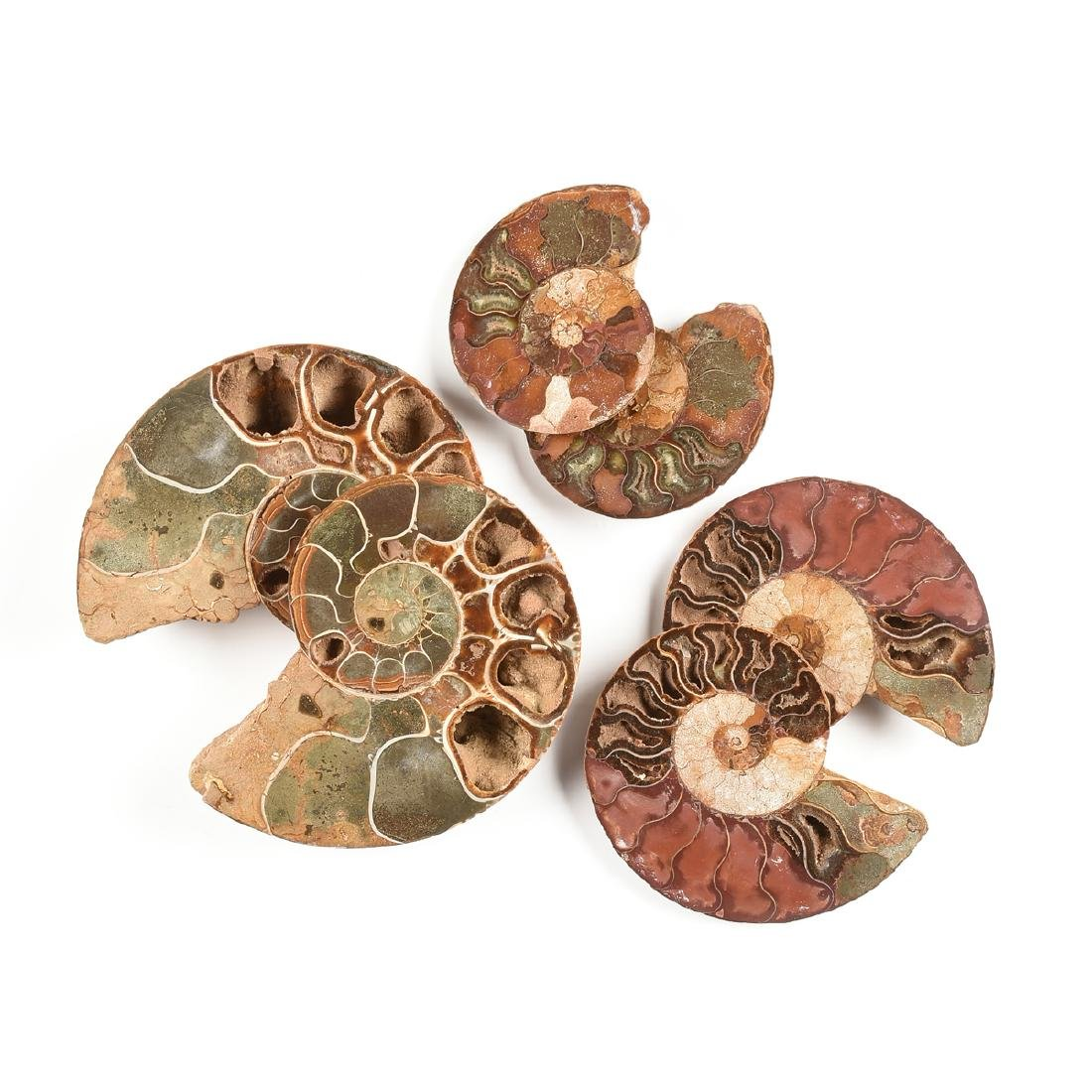 A GROUP OF THREE GRADUATED BISECTED POLISHED AMMONITE