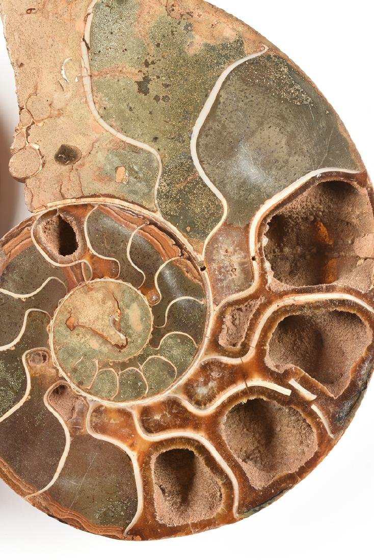 A GROUP OF THREE GRADUATED BISECTED POLISHED AMMONITE - 4